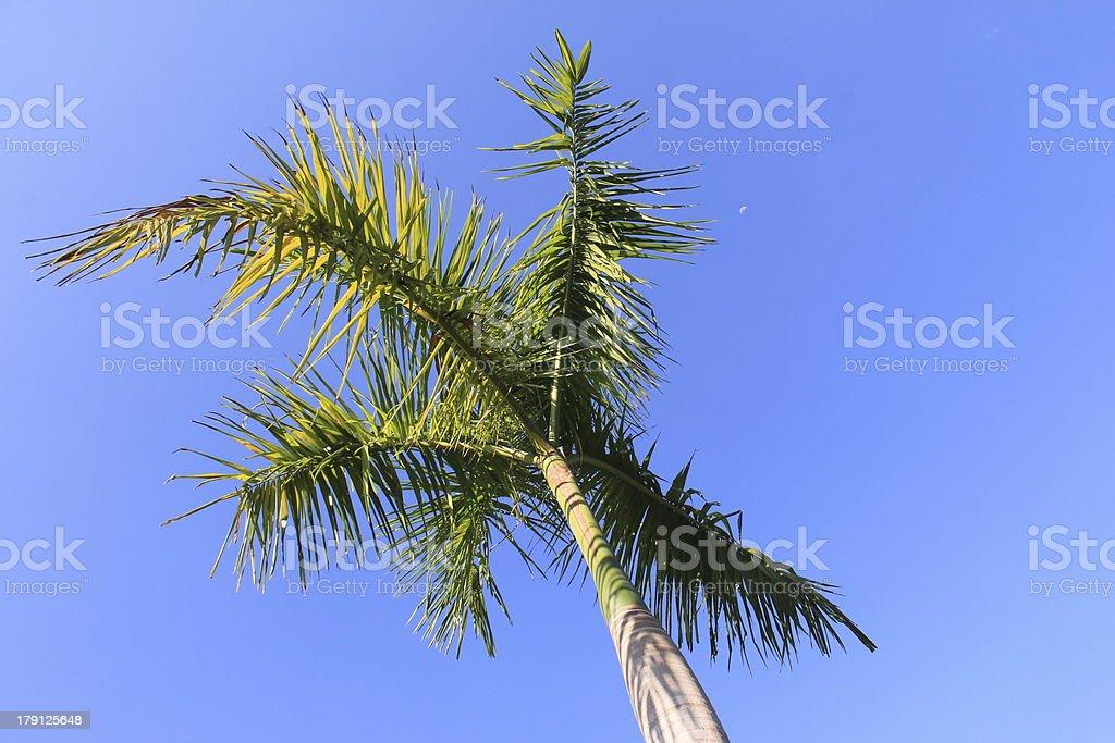 Palme1 stock photo