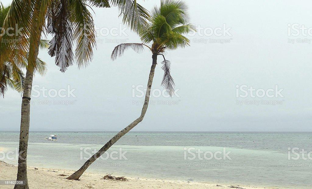 palmeras stock photo