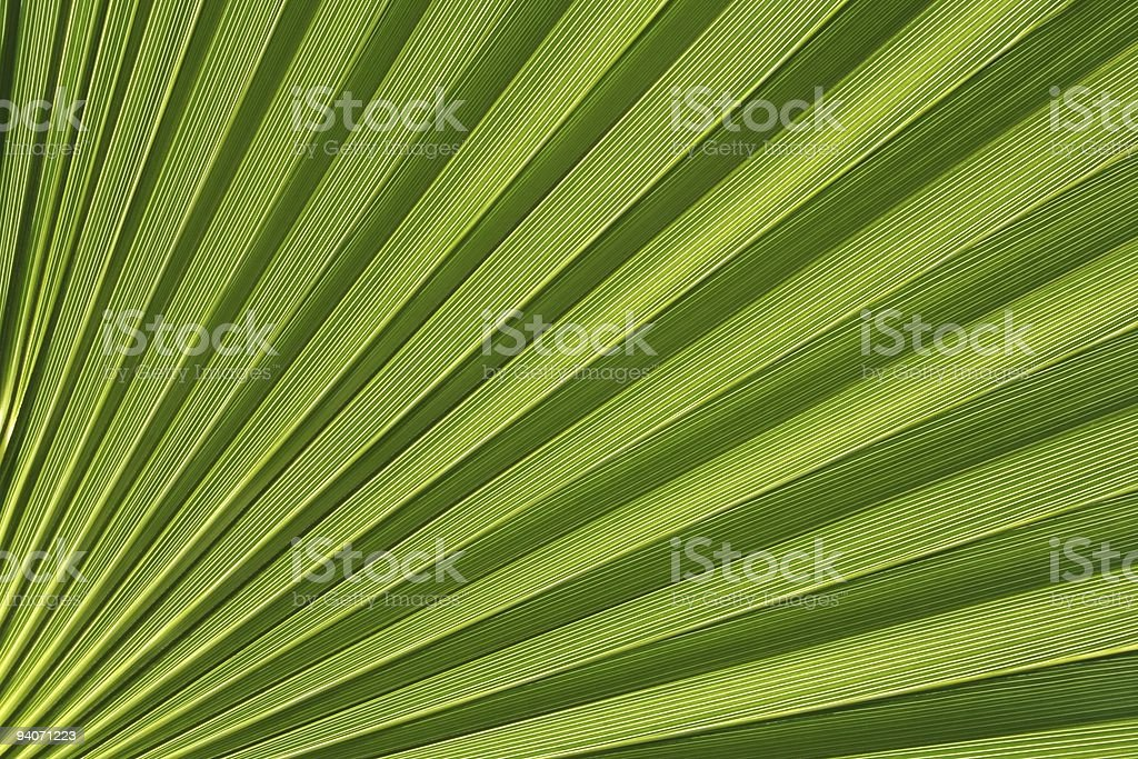 Palmetto Abstract royalty-free stock photo