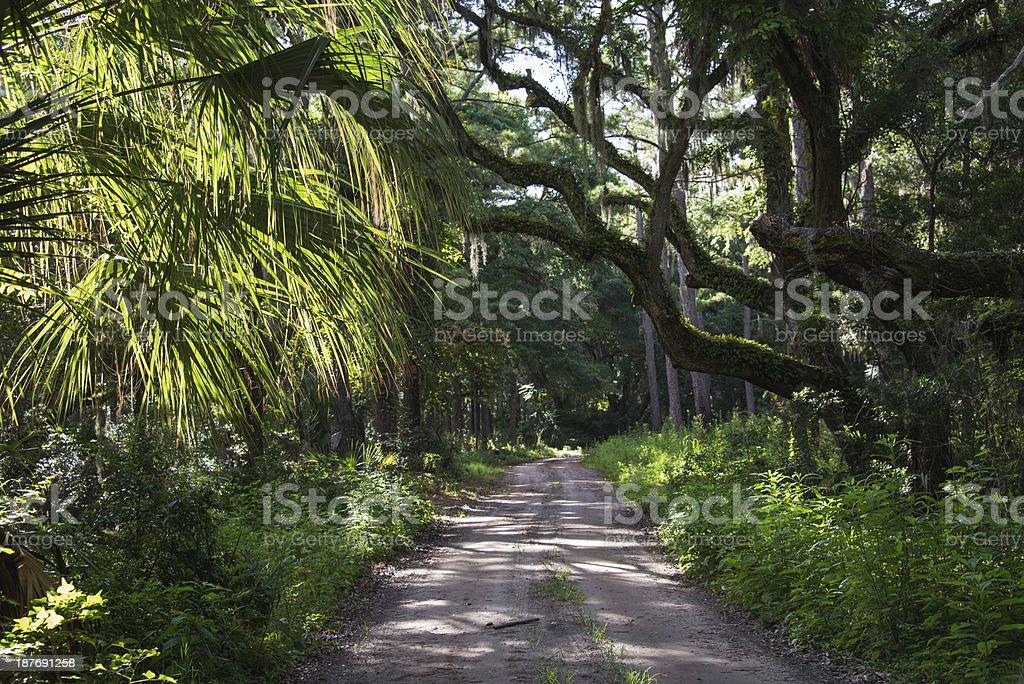 Palmetto Forest stock photo