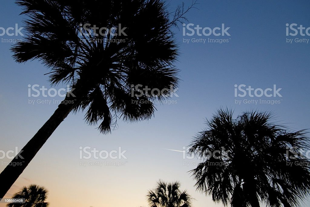 Palmetto trees at dusk royalty-free stock photo