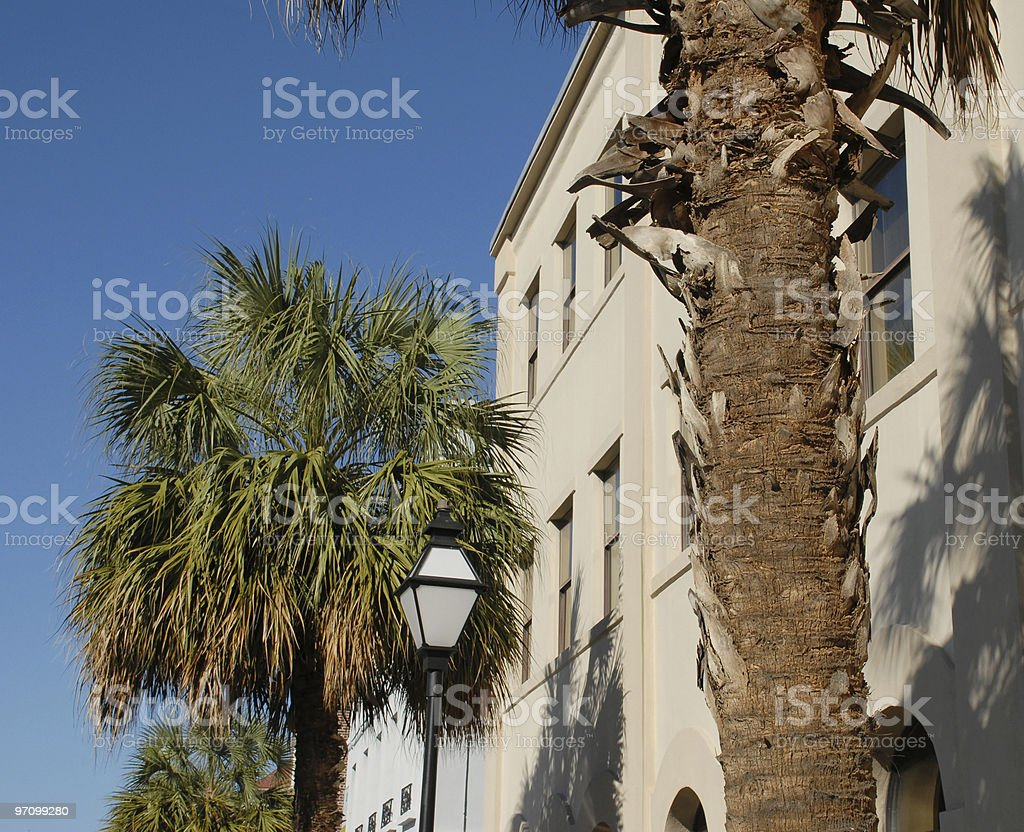 Palmettos grow along the streets of Charleston royalty-free stock photo