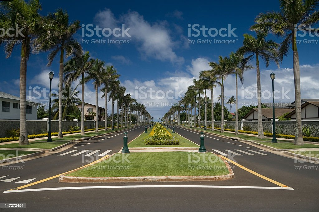 Palm-lined street royalty-free stock photo