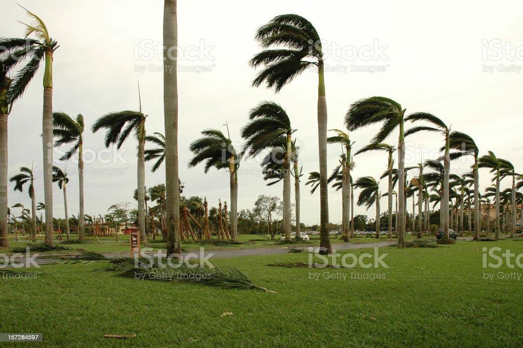 palms after storm stock photo