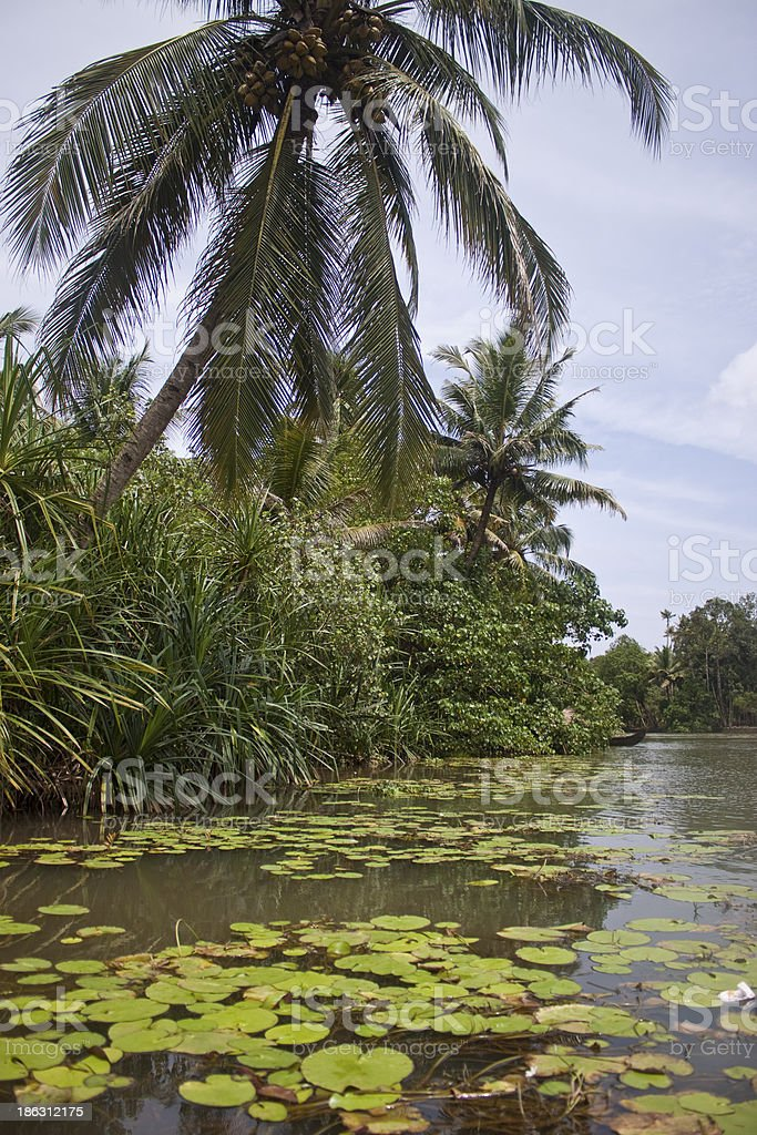 Palms along canals and lakes in Backwaters royalty-free stock photo