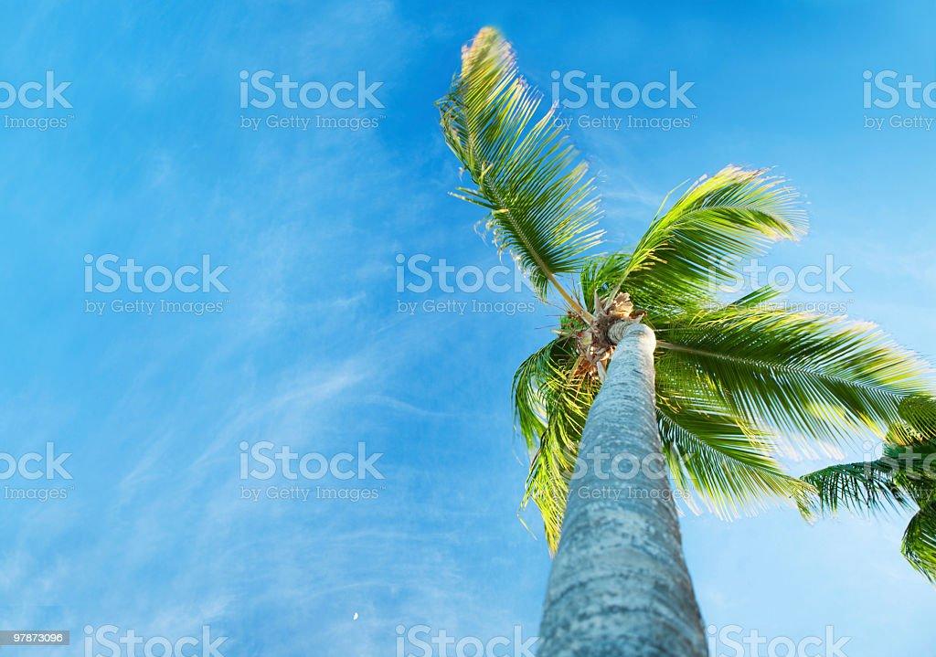 Palms and Caribbean sky royalty-free stock photo
