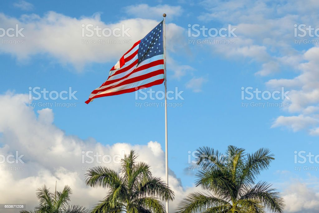 Palms and flag stock photo