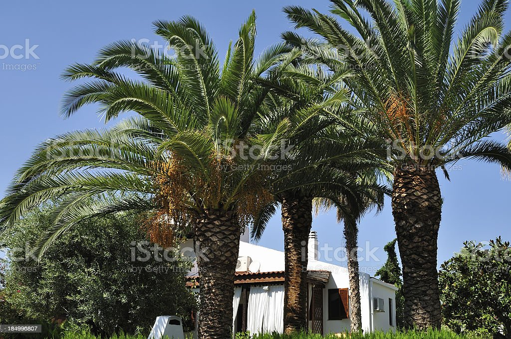 Palms and green environment at summer resort in Halkidiki, Greece stock photo