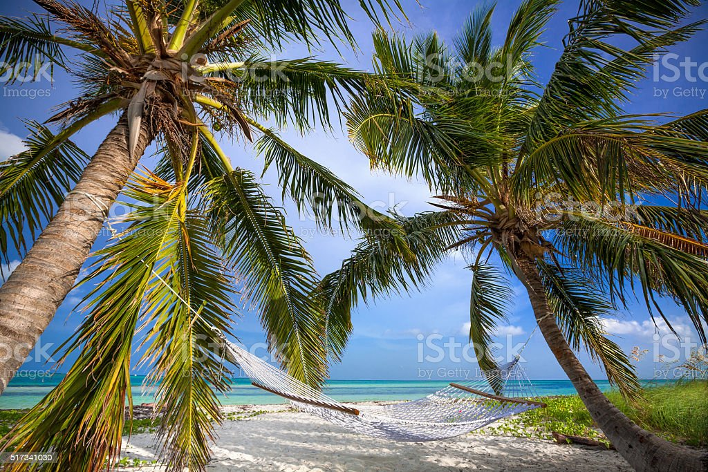 Palms and Hammock in Florida Keys stock photo