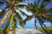 Palms and Hammock in Florida Keys