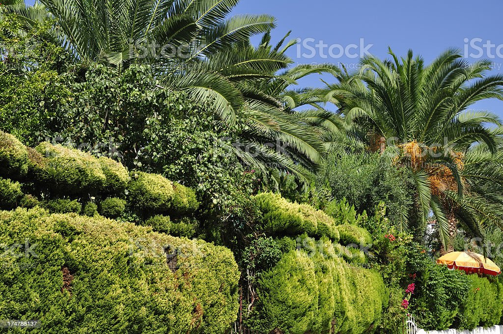 Palms and lush foliage at summer resort in Halkidiki, Greece stock photo