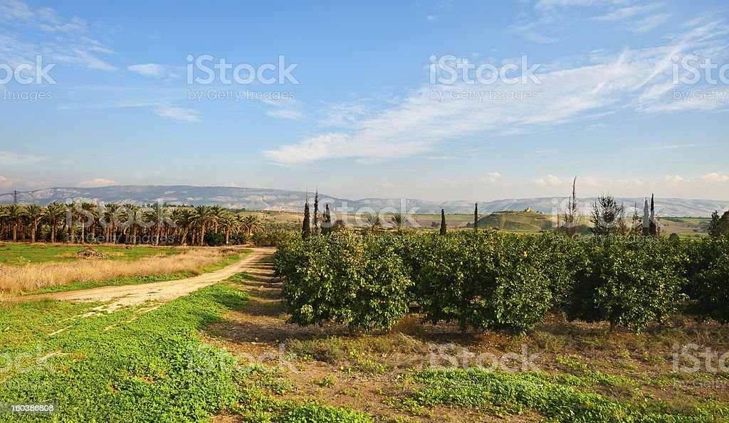 Palms and Oranges royalty-free stock photo