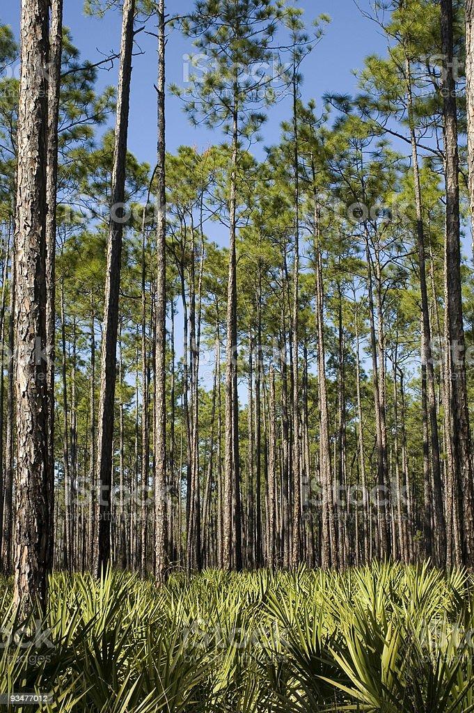 Palms and Saw Palmettos royalty-free stock photo