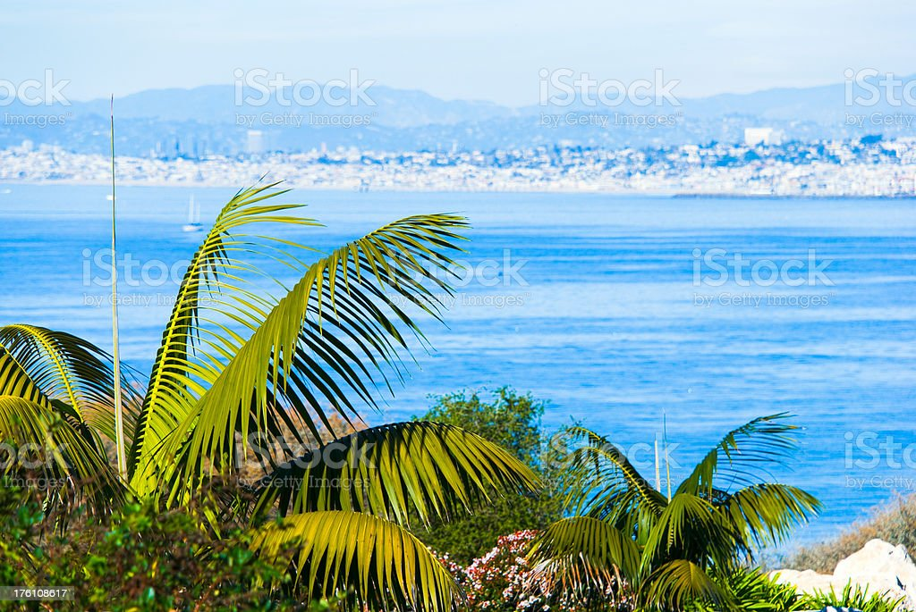 Palms and the Santa Monica Bay in Los Angeles stock photo