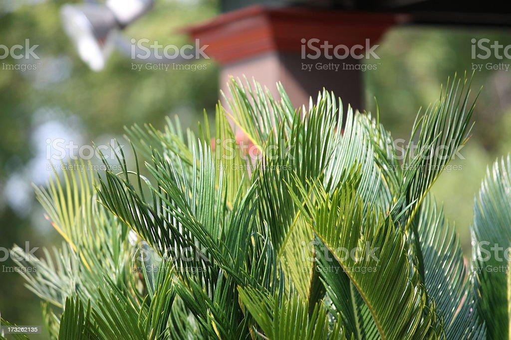 Palms at a Beach Resort royalty-free stock photo