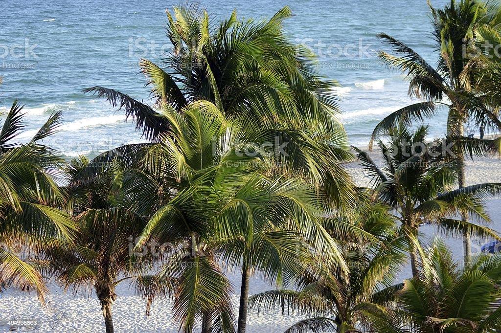 Palmiers de la plage photo libre de droits
