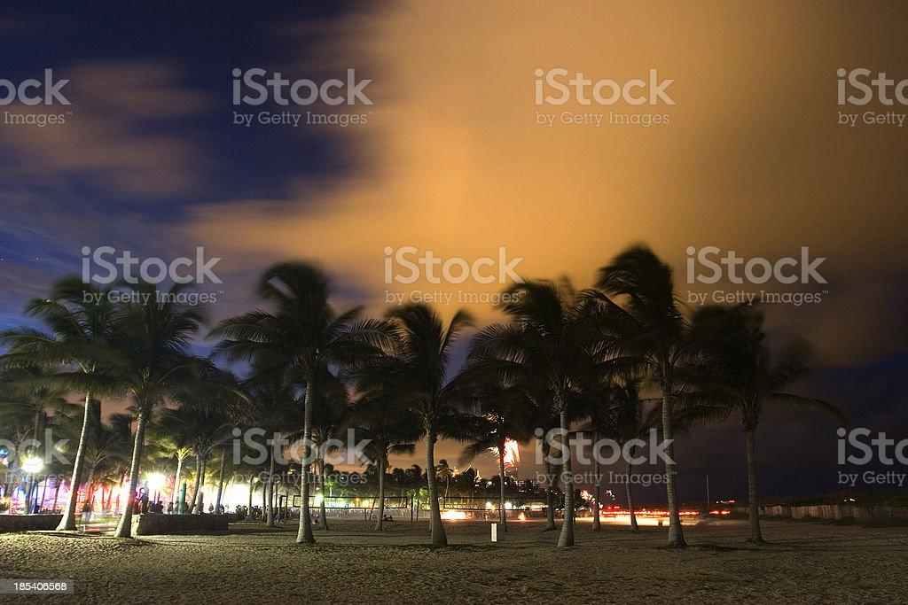 Palms at night royalty-free stock photo