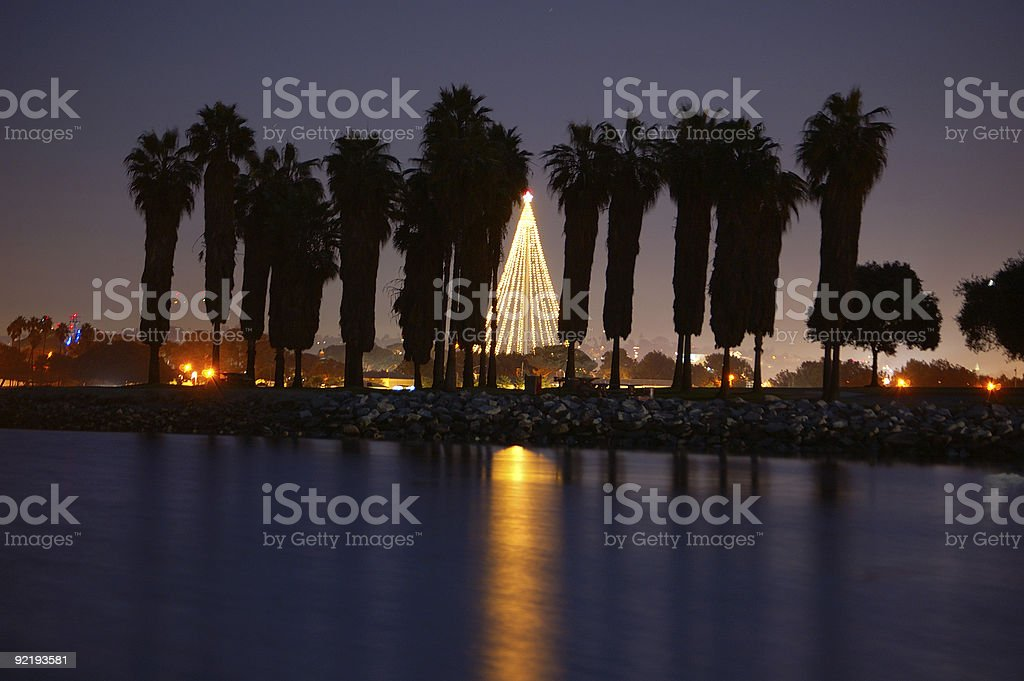 Palms at Night stock photo