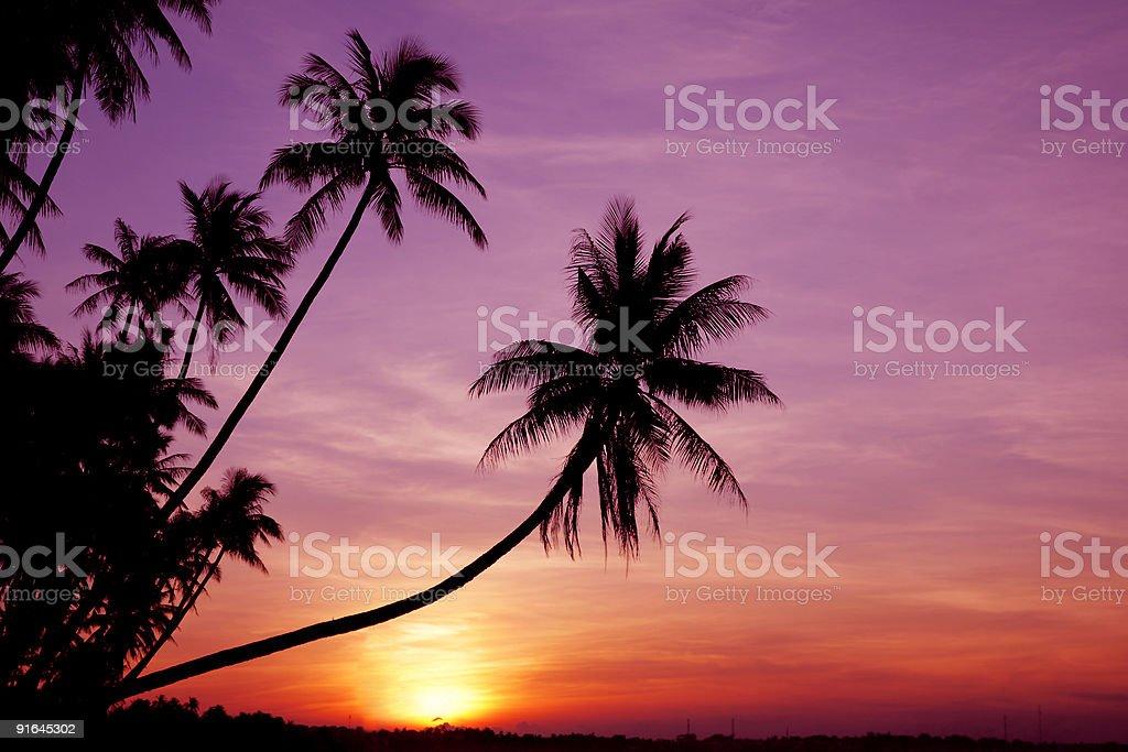 Palms at Sunrise stock photo