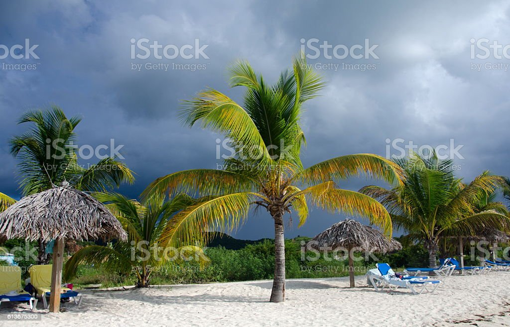 Palms, beach chairs and palm leaf umbrellas - 2 stock photo