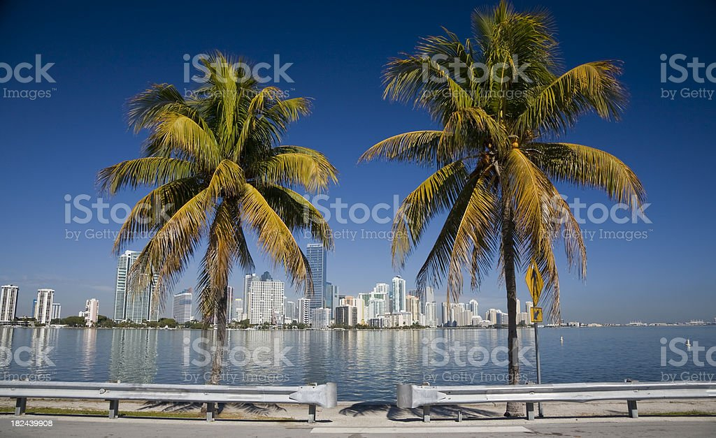 Palms in Miami stock photo