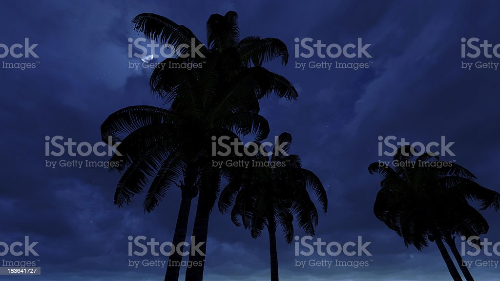 Palms in Moonlight royalty-free stock photo