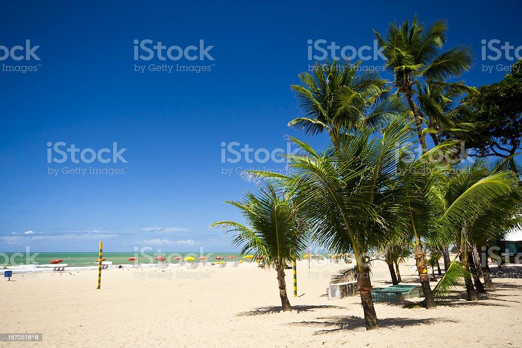 Palms in Recife, Brazil stock photo