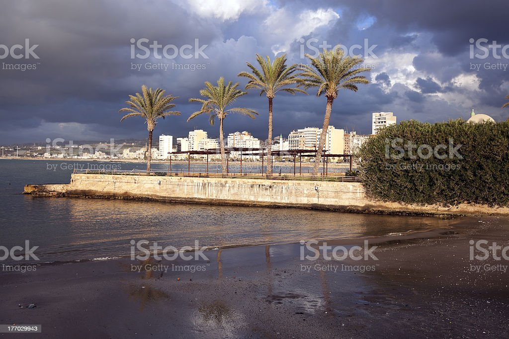 Palms in Sidon stock photo