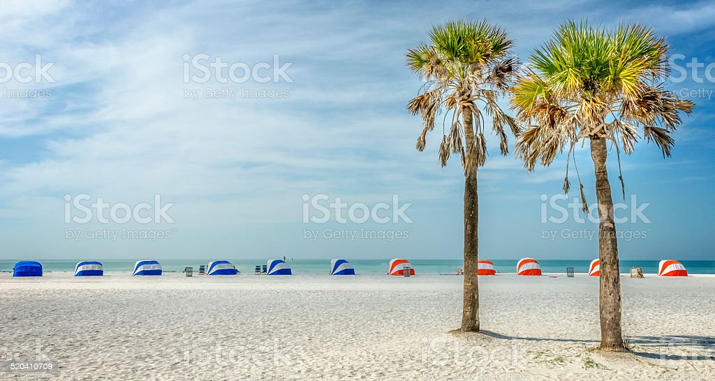 Palms of Clearwater stock photo