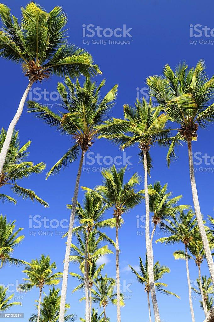 Palms on blue sky stock photo