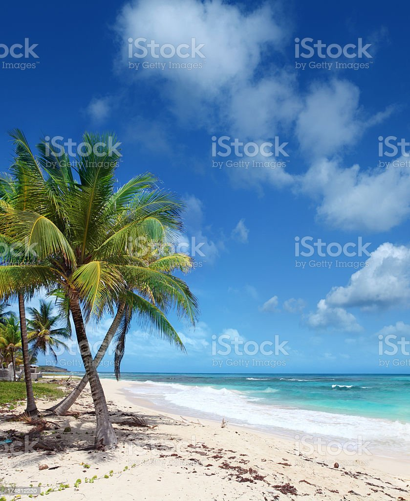 Palms on caribbean Beach stock photo