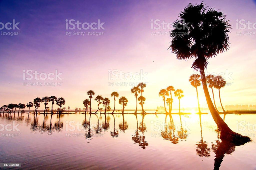 Palms on rice field in flooding season, Mekong Delta, Vietnam stock photo