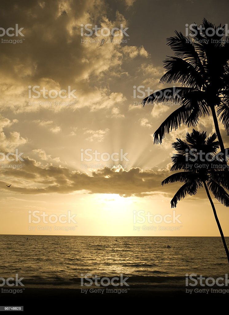 Palms on the Beach royalty-free stock photo