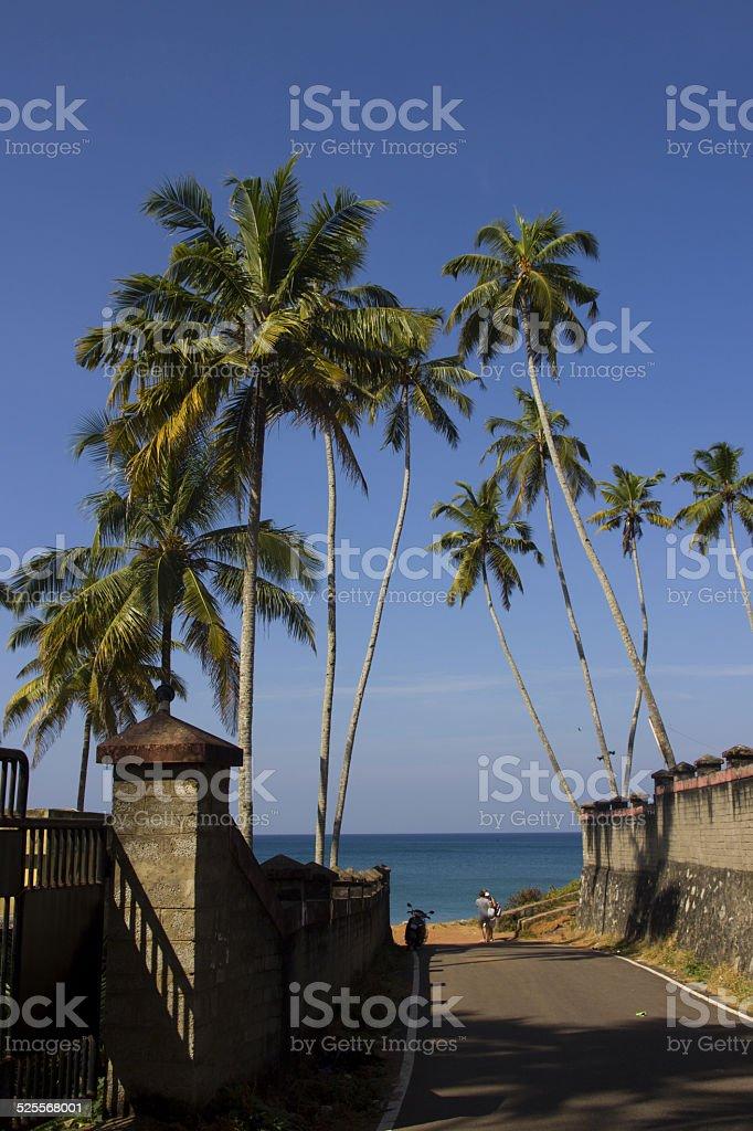 Palms on the Road to The Black Beach, Kerala, India royalty-free stock photo