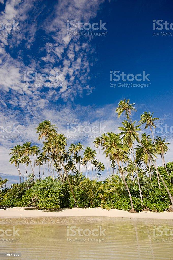 Palms over Virgin Cove stock photo
