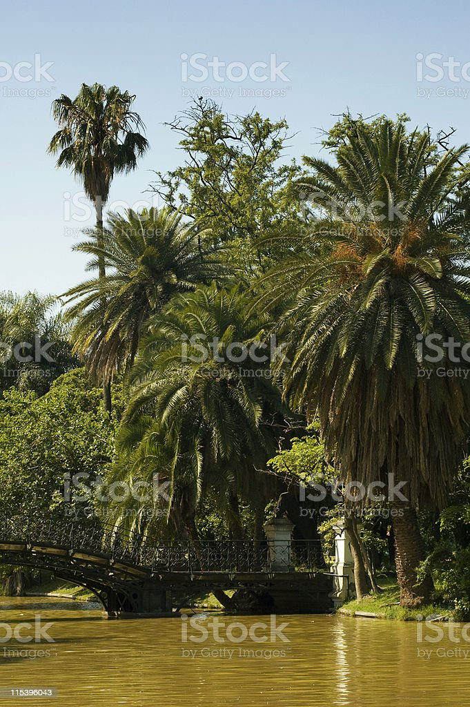 palms royalty-free stock photo