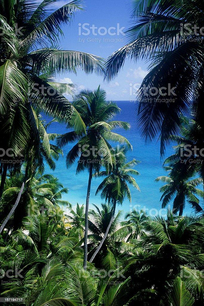 palms & sea XXXL royalty-free stock photo
