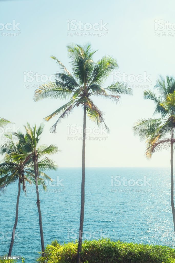 Palms, sky and sea stock photo