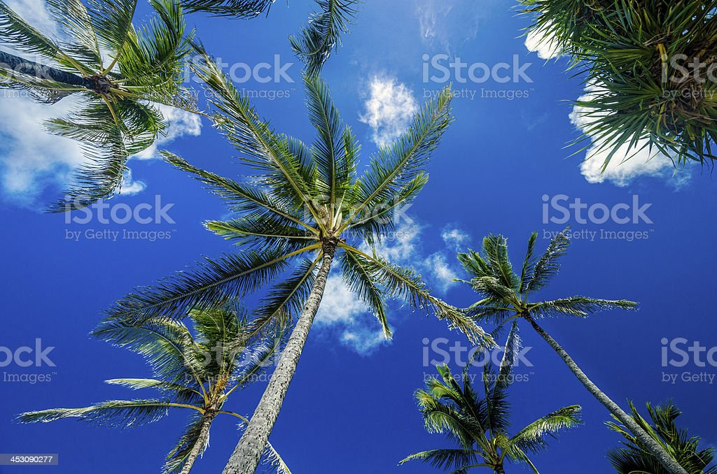 Palmscape stock photo