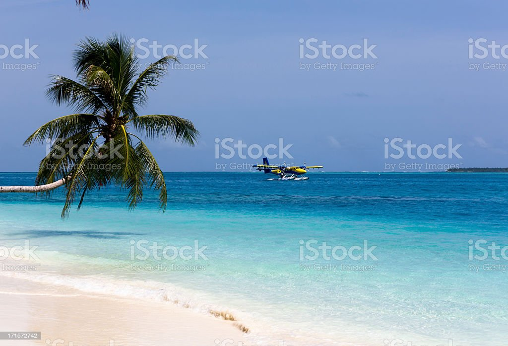 Palmtree and Sea-Plane stock photo