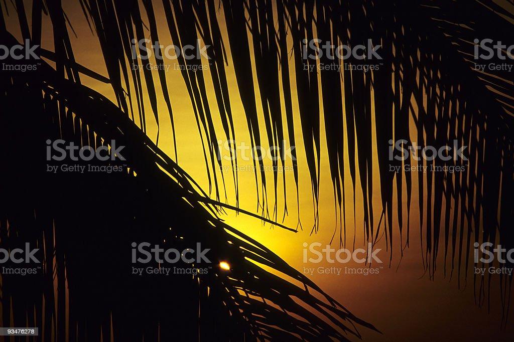 Palmtree in Sunset stock photo