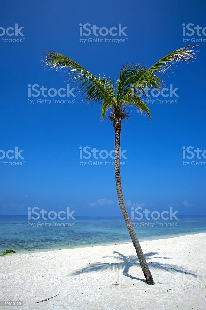 palmtree is on an uninhabited island royalty-free stock photo