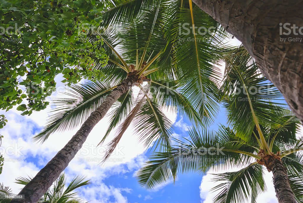 Palmtree, sky and clouds royalty-free stock photo