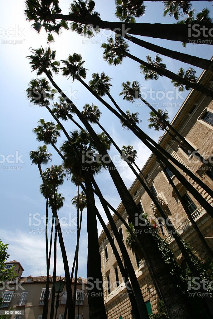 Palmtrees in Sevilla, Spain stock photo