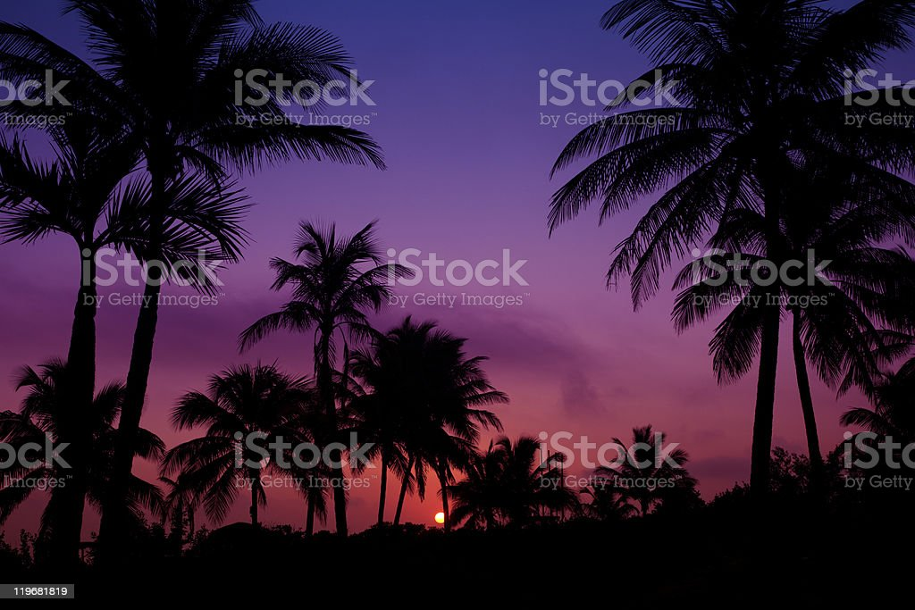 palmtrees  silhouette on sunrise in tropic royalty-free stock photo