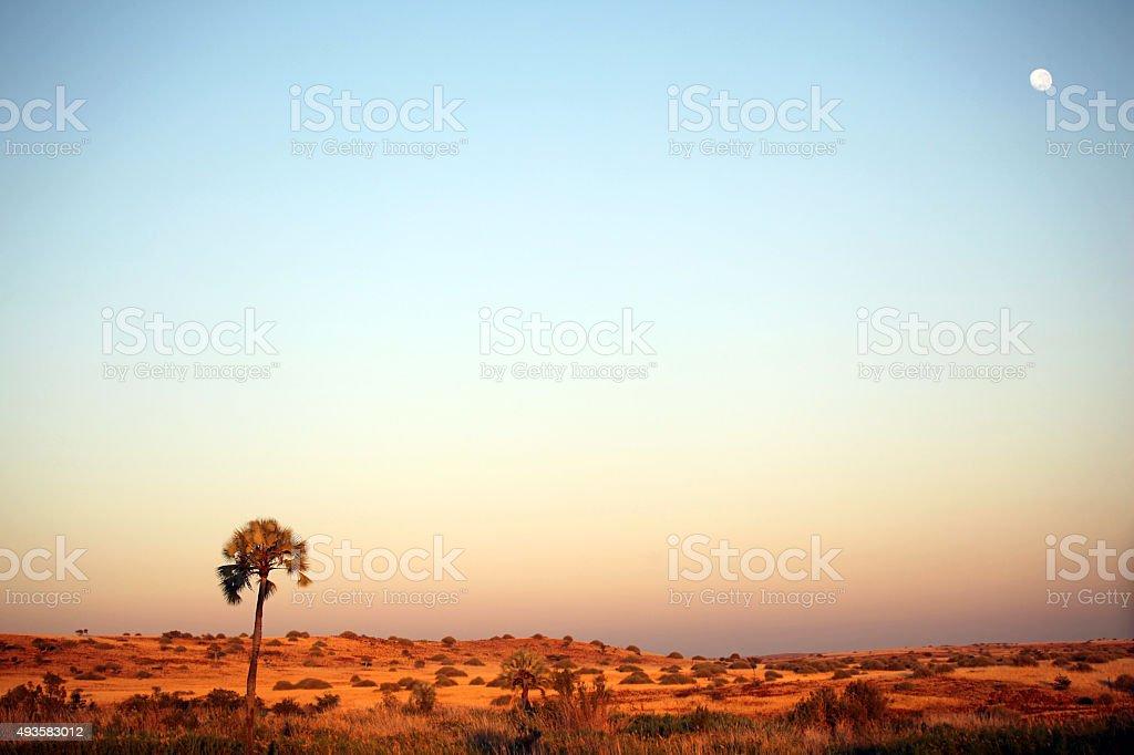Palmwag Landscape at Sunset - Namibia Africa stock photo