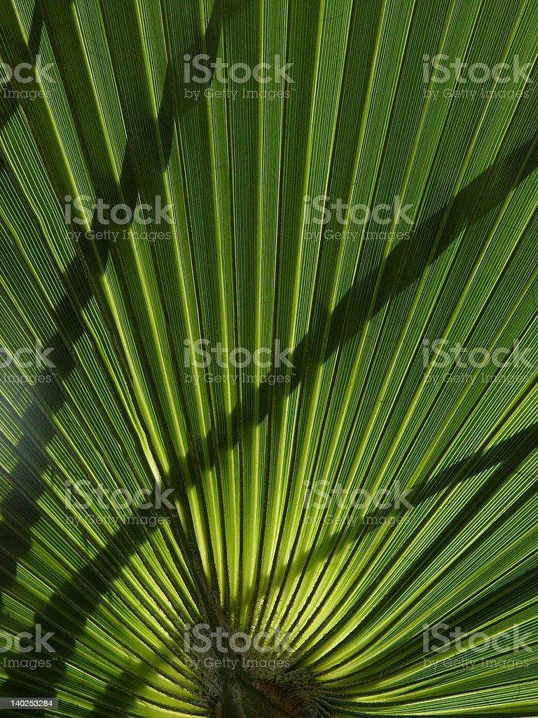 Palmwedel stock photo