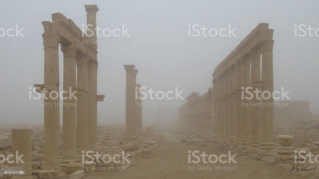 Palmyra columns in fog stock photo