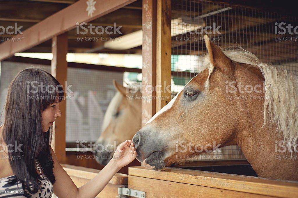 Palomino and Girl stock photo
