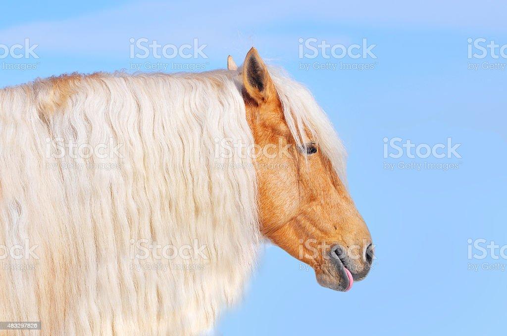 palomino horse with long mane stock photo